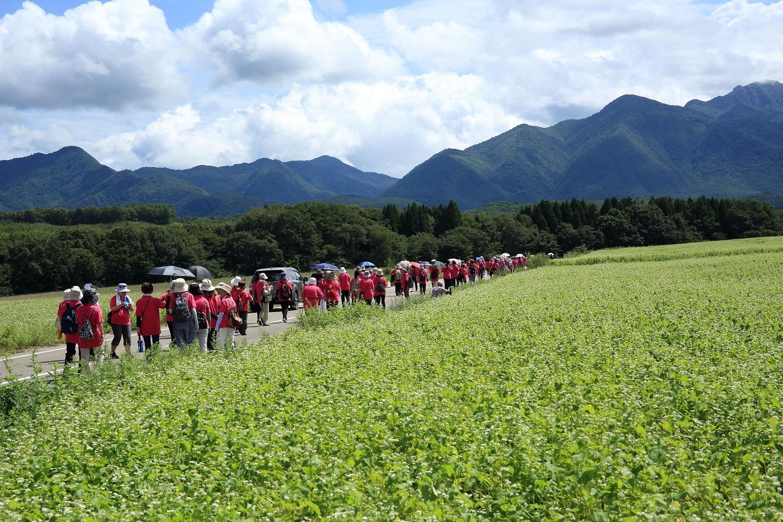 ブログ ソバ畑 赤い軍団の行進.jpg