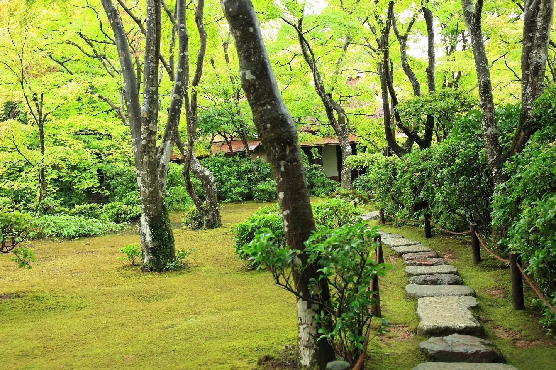ブログ 滴水庵への苔の庭.jpg