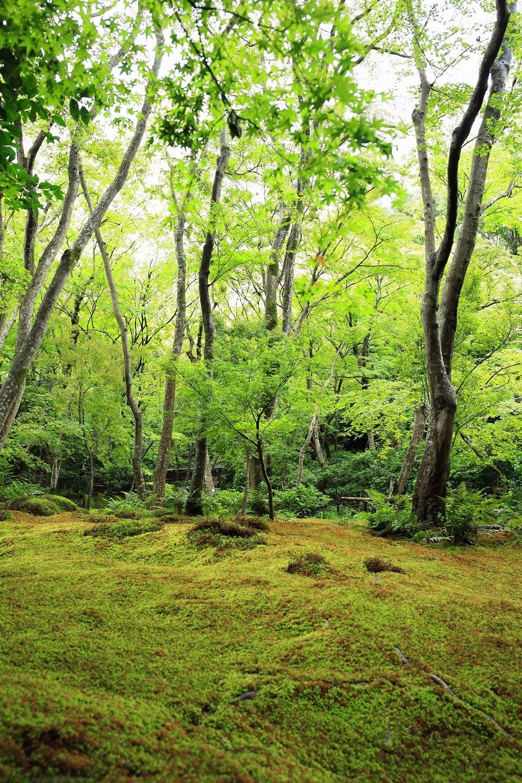 ブログ 祇王寺の苔庭.jpg