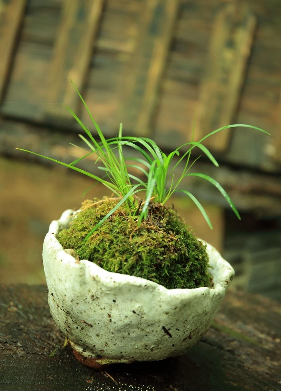 ブログ 苔の野草盆栽.jpg