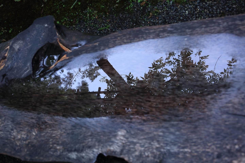 ブログ 木製ベンチの凹みに水が溜まり藤が映っていた.jpg
