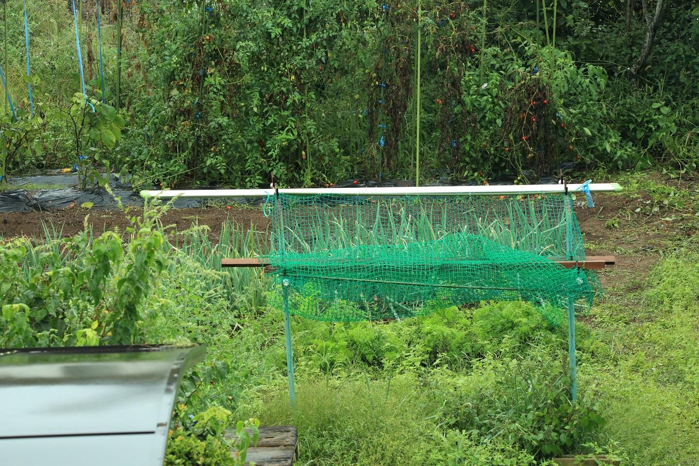 ブログ 外は雨、少し菜園の土も見えるね.jpg