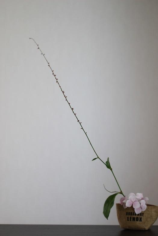 ミズヒキ 紫陽花
