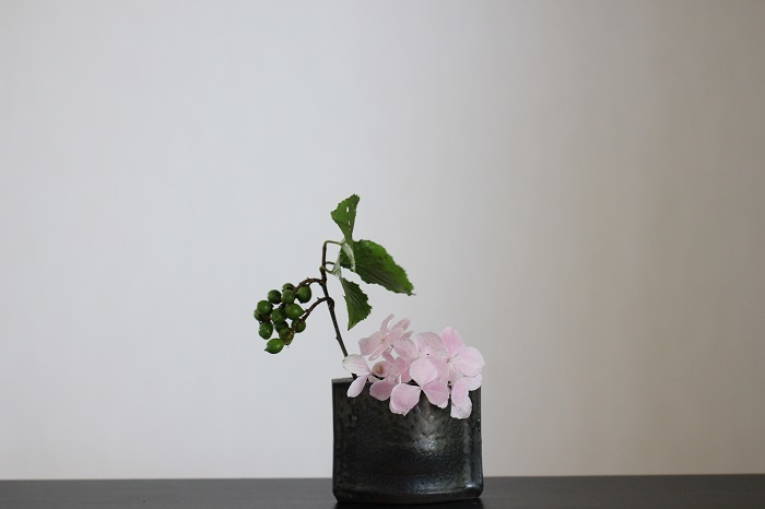 紫陽花 グリーンの実