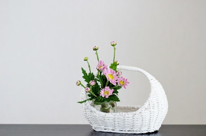 菊(園芸種)