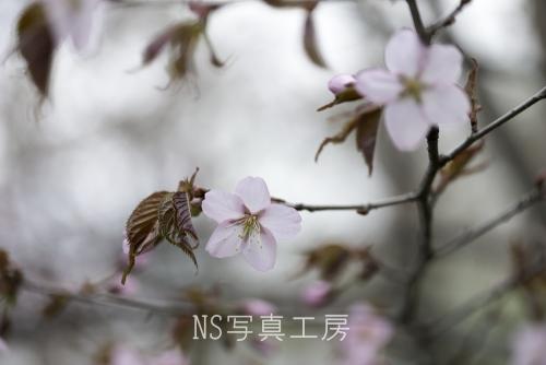 _DSY5831.jpg