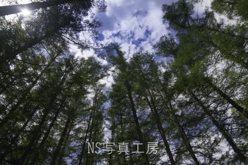 _DSY6138.jpg