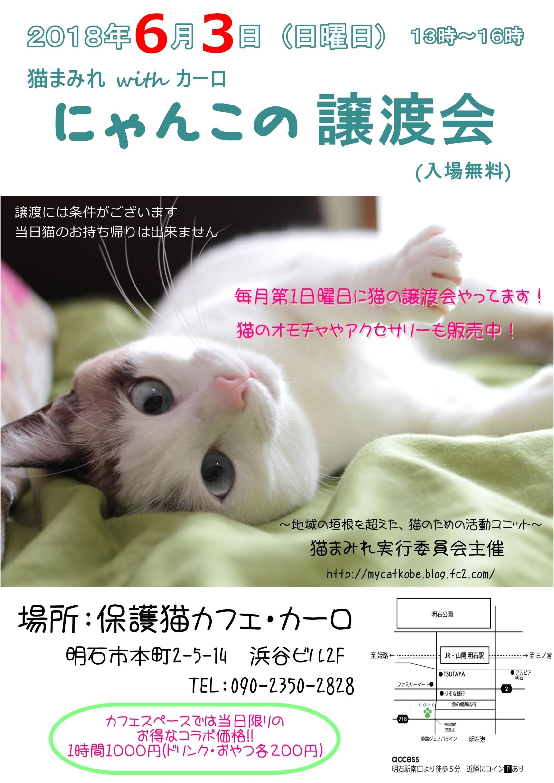 譲渡会6月ブログ用
