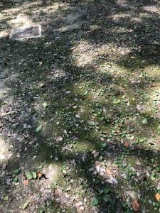 葛葉稲荷神社1