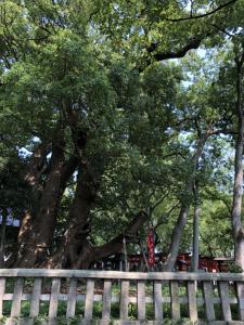 葛葉稲荷神社4
