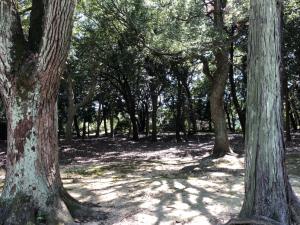 野々宮神社1