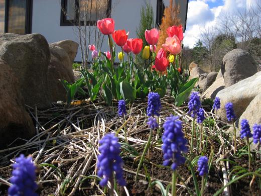 2018_4月リアンの庭1