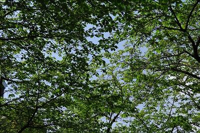 20180416_葉桜IMG_6015