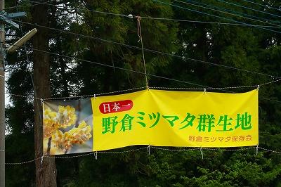 20180423_野倉ミツマタ群生地IMG_6981