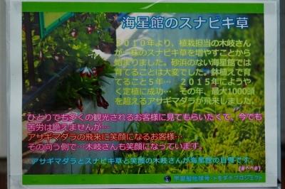 20180426_スナビキ草IMG_1108b-50cn50L