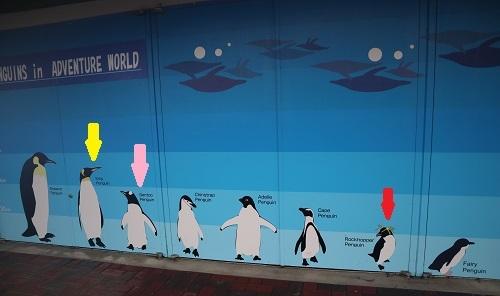 ペンギンサイズ