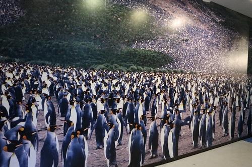 ペンギンのふるさと