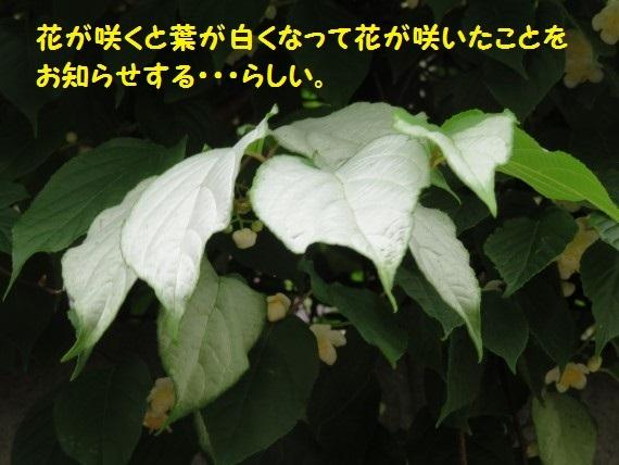 20180607-07.jpg