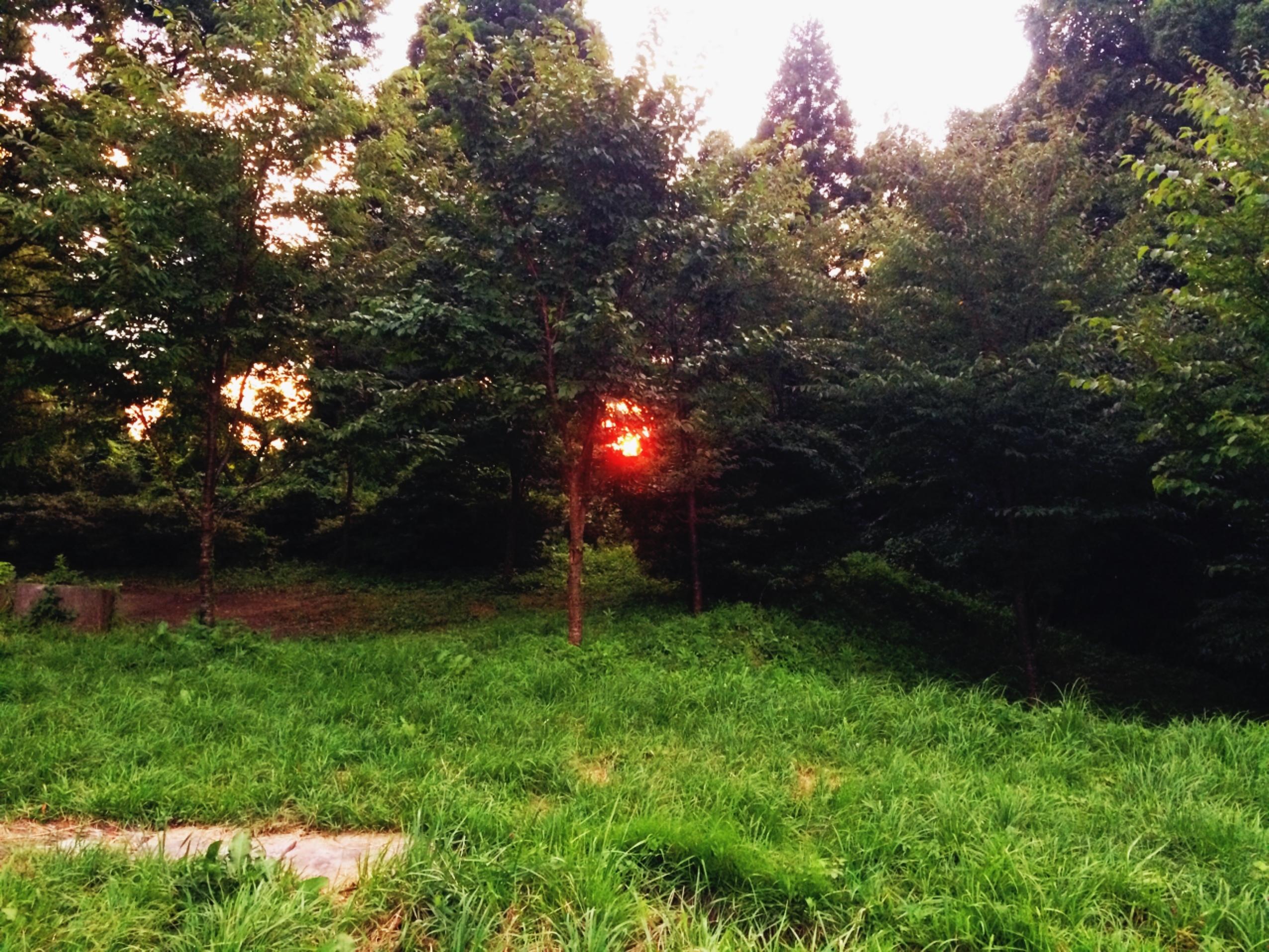 若杉楽園キャンプ場 夕日