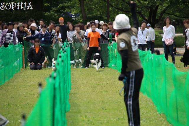 第20回犬の大運動会
