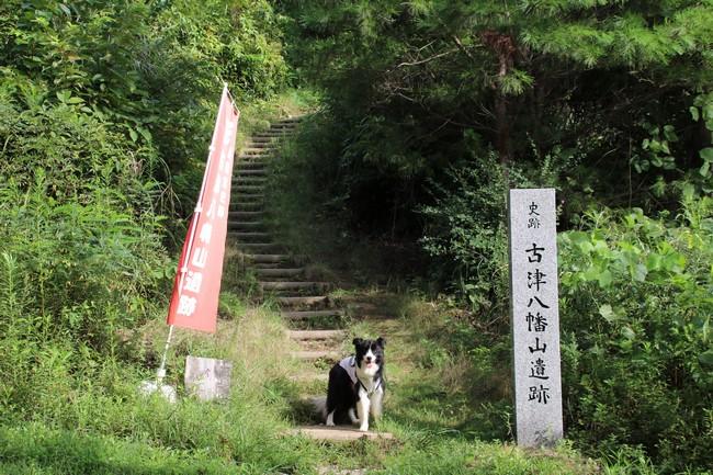 古津八幡山遺跡