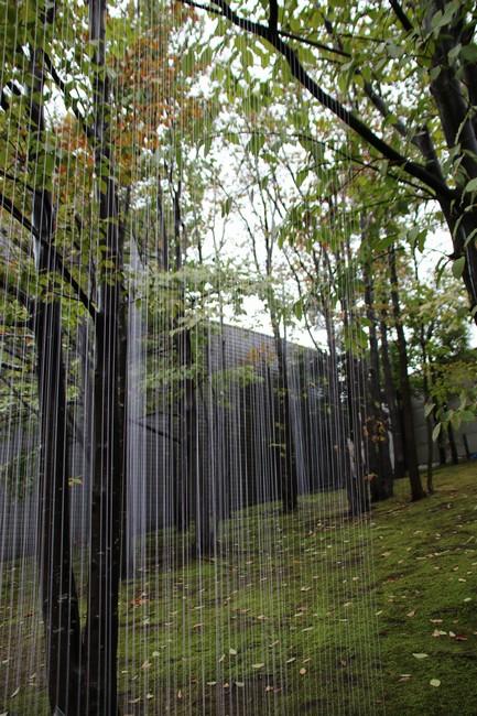 古川知泉 Rain Tree(降り注ぐ恩寵)
