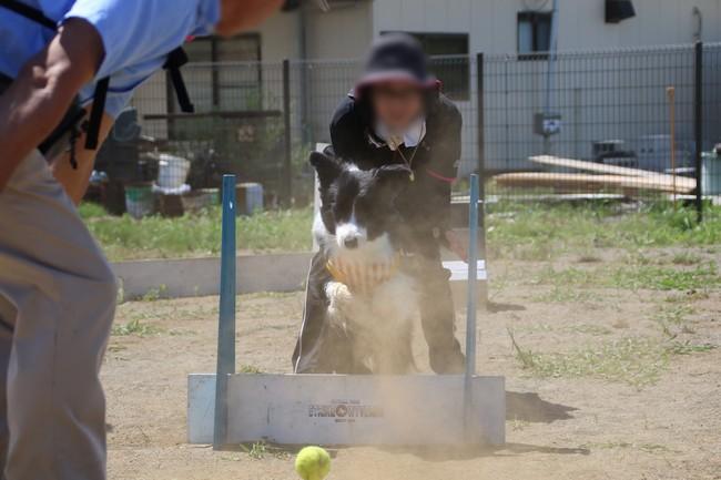 HAN2 with R 主催♡ボーダーコリースポーツオフ会③