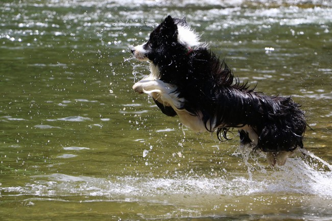 県境川遊び