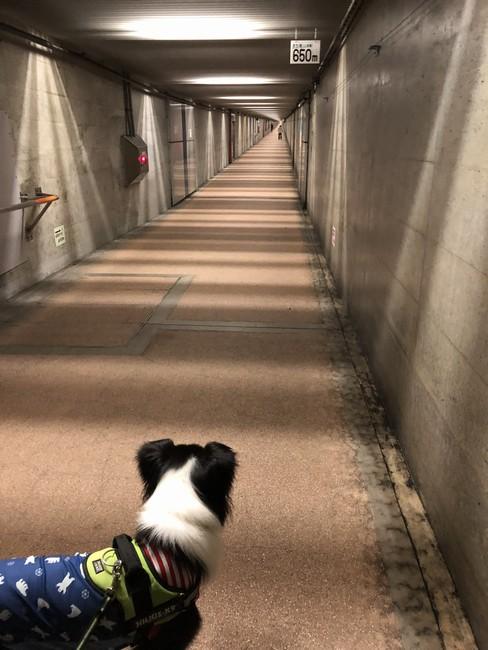 みなとトンネル散歩