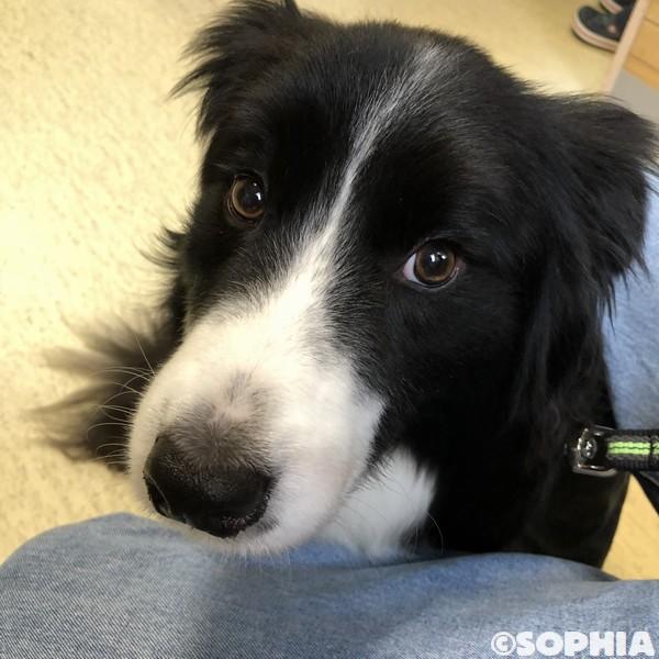 狂犬病予防接種2018