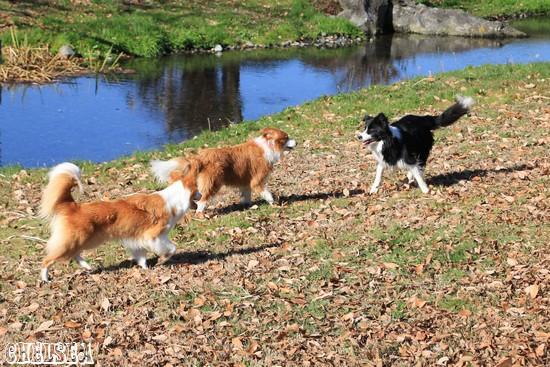 池の周りで遊ぶ三頭
