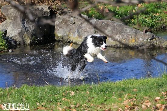 池の中を走るDawn太