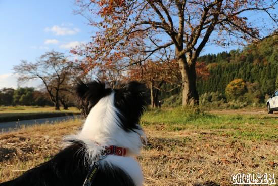 麒麟山公園_桜の紅葉