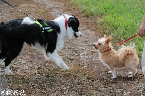 小型犬と出会ったDawn太