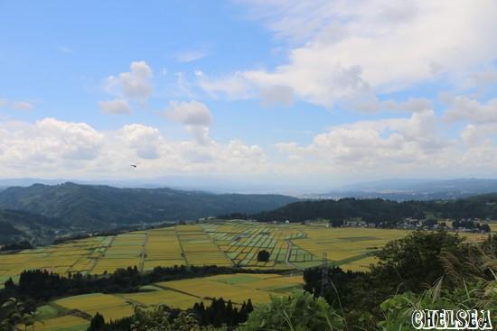 山本山から望むパッチワークのそば畑