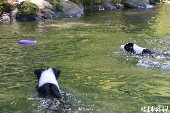 ドイルくんと競泳