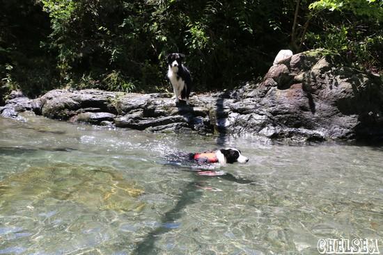 目の前をテオくんが泳いでいた