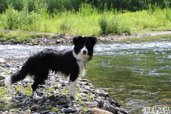 日に二度目の川遊び