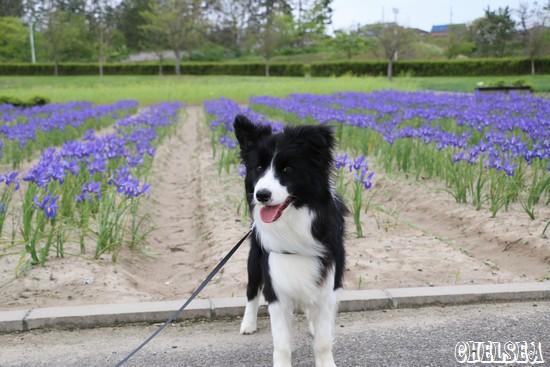 紫雲寺記念公園