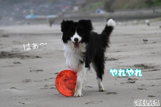 Dawn太_432日_初DISC