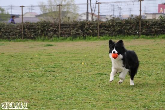 ボール遊びをするDawn太