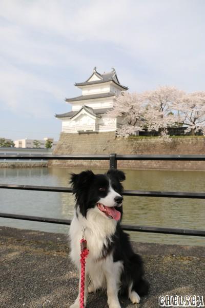 新発田城三階櫓とDawn太