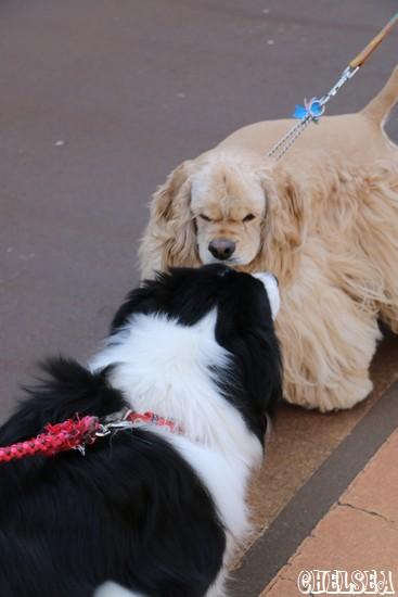散歩中の犬とDawn太
