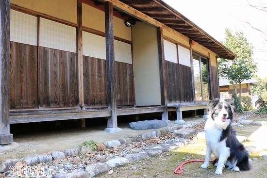 旧成田家住宅前のDawn太