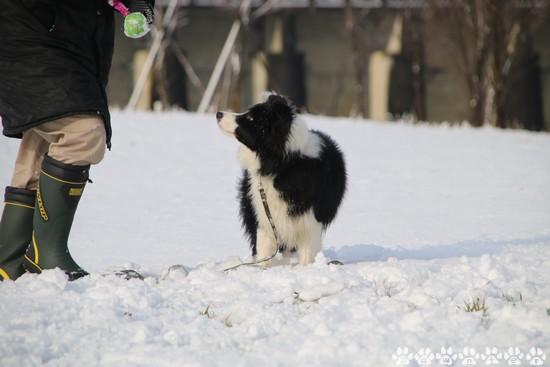 Dawn太_328日_雪遊び