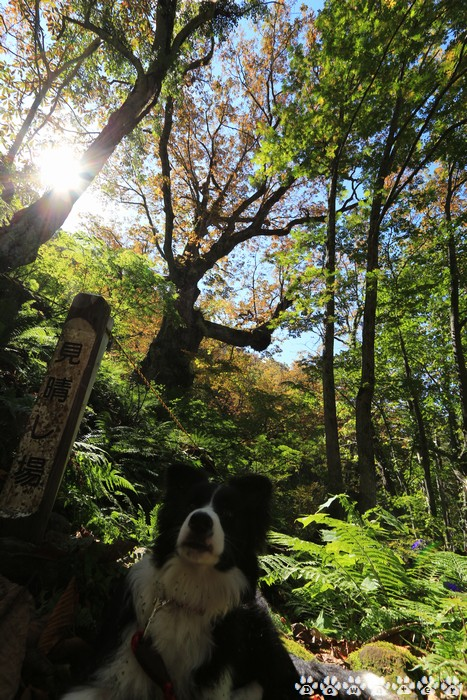 Dawn太と大栃の木