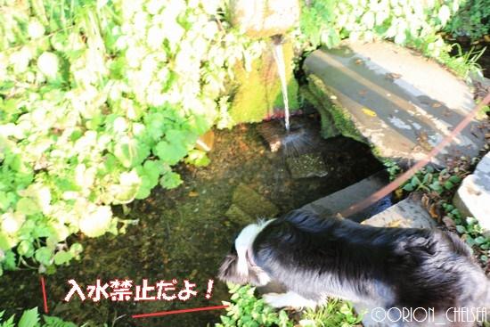 吟田川湧水
