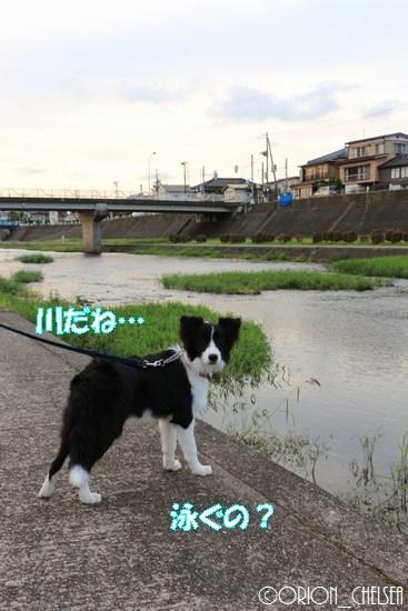 加茂川に立つDawn太