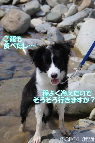 利根川で遊ぶDawn太