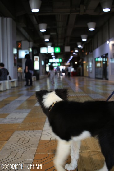 Dawn太_バスセンター